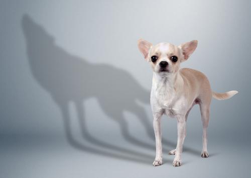 כלב קטן שנראה מפחיד