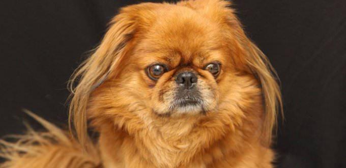 האם ניתן להתגבר על פחד מכלבים?